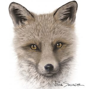 fox_dibujo_digital