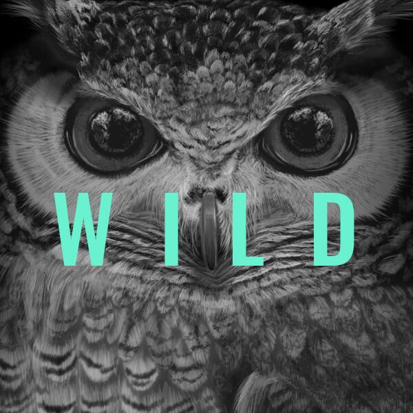 ilustraciones_wild_portfolio